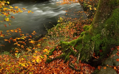 Lake District in Autumn ~ Landscapes & Red Squirrels …