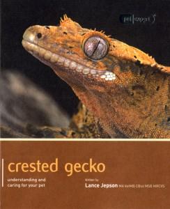 Crested gecko Pet Expert