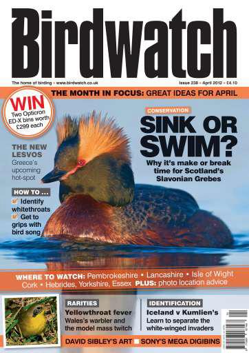 Birdwatch Magazine ~ April 2012