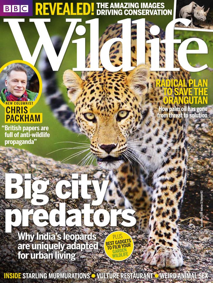 BBC Wildlife Magazine – December 2014