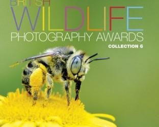 British Wildlife Photography Awards 2015