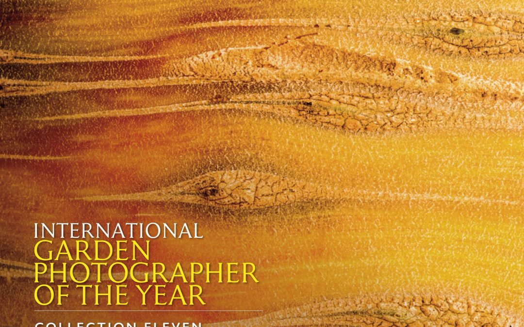 IGPOTY 2018 – AWARDS