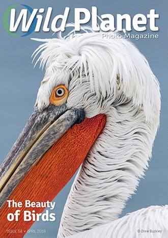 Wild Planet Photo Magazine – April 2018