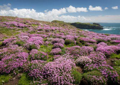 SKOMER ISLAND PUFFIN PHOTOGRAPHY DAY (17)