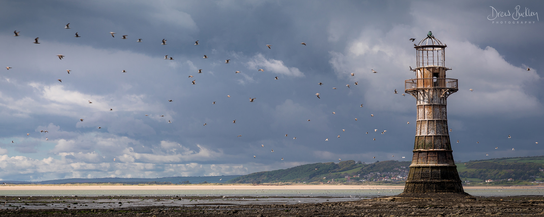 Whiteford Birds