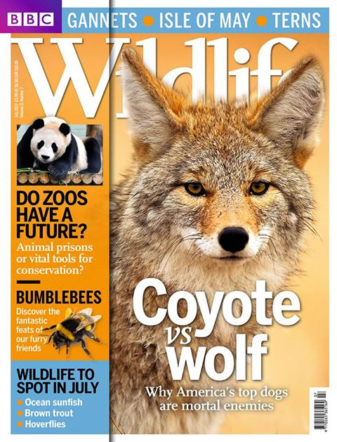 BBC Wildlife Magazine – July 2013