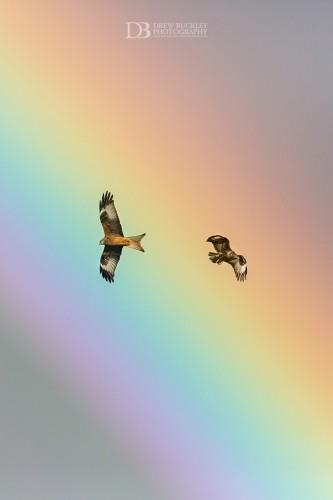 Soaring Spectrum