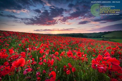 Poppy_Field_Sunset_L