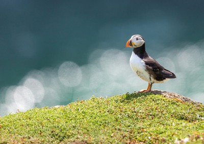 Skomer Island Puffin Photography Day