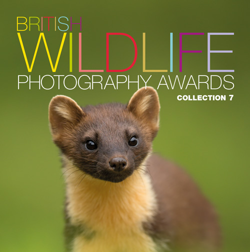 BWPA 2016 – Highly Commended