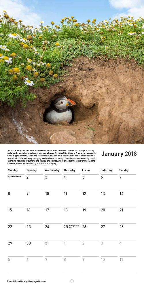 Drew Buckley 2018 Puffins Calendar - Inside