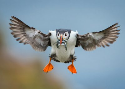 SKOMER ISLAND PUFFIN PHOTOGRAPHY DAY (1)