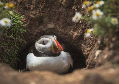 SKOMER ISLAND PUFFIN PHOTOGRAPHY DAY (10)