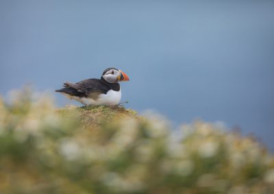 SKOMER ISLAND PUFFIN PHOTOGRAPHY DAY (8)
